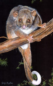 ringtail_possum_by_arrowfire-d5p6eg1