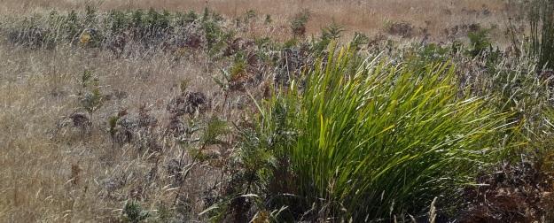 Dry vegetation starting out.jpg