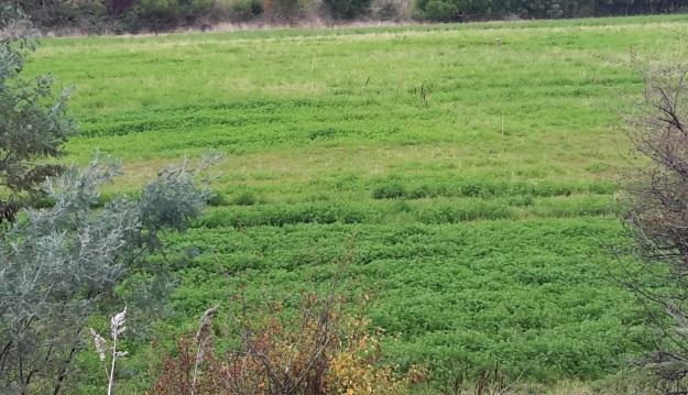 Flat area below vines before hatchery.jpg