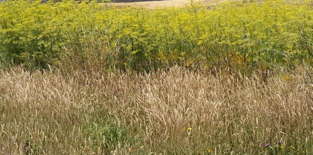 On Cluny - yellow crop.jpg
